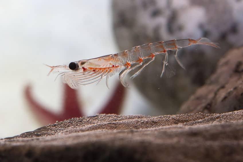 aceite krill dosis diaria