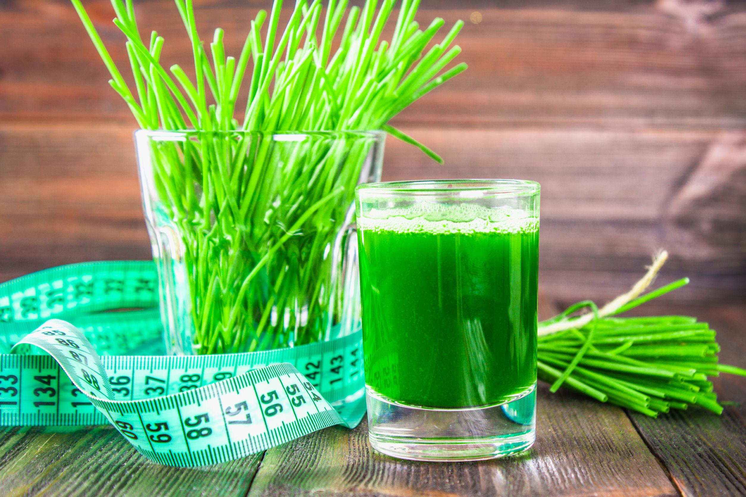 Wheatgrass: ¿Cuál es el mejor producto del 2020?