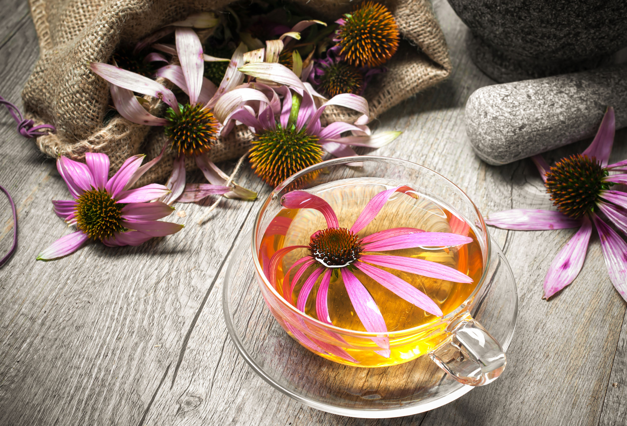 image de flor de equinacea en una taza de té